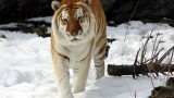 What do the animals at the Bronx zoo do in the winter?