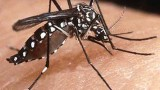 Dengue fever warming up to human habits