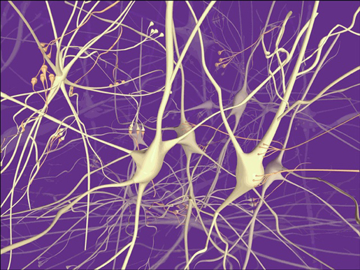 Computer-rendered graphic of neurons at work. [Credit: cerebromente.org]