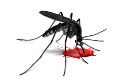A malaria vaccine may finally be within reach. [Credit: Zoran Ozetsky]