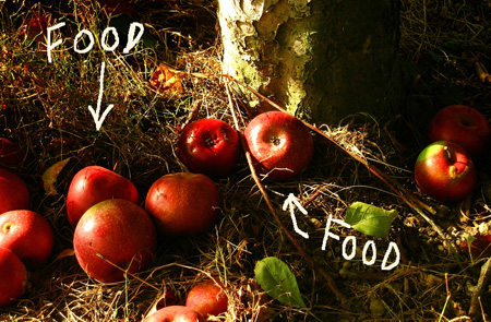 Surpluses of fruit in urban areas should go to the hungry instead of the ground, some say. <br>[Photo credit: 'r-z' from Flickr]