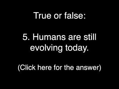 Evolution Quiz 5