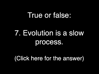 Evolution Quiz 7