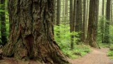 Are old forests carbon neutral?