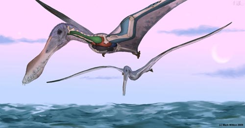 Air sacs under their skin may have helped pterosaurs stay aloft [Credit: Mark Witton].