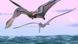 Biologists Discover How Prehistoric Flying Reptiles Stayed Aloft