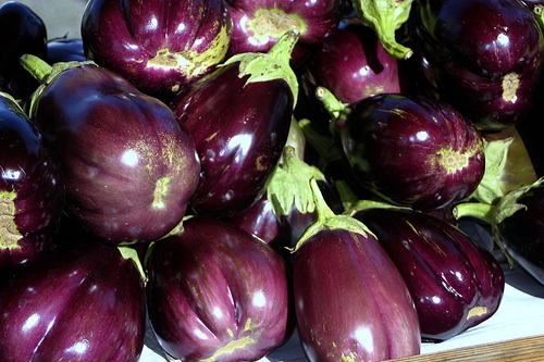 Will Eggplant be the World's Next GM Crop?