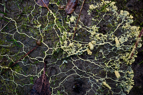 Run, Don't Walk from… the Slime Mold?