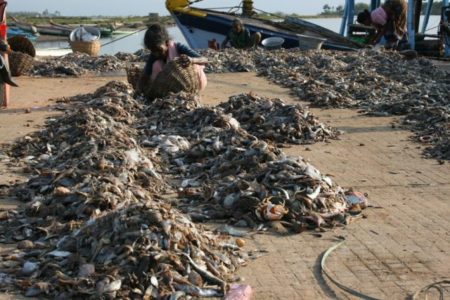 "Fishing ""Down The Pricelist"" Threatens Ocean Ecosystems"