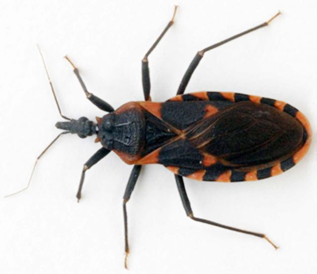 Chagas disease: the silent killer