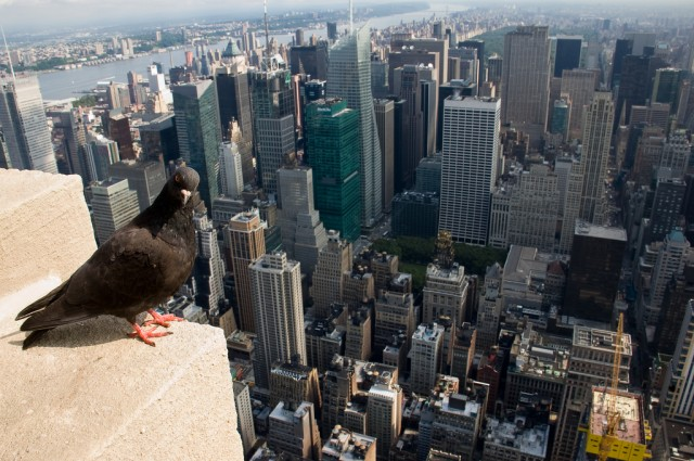 Rehabilitating New York City's wildlife