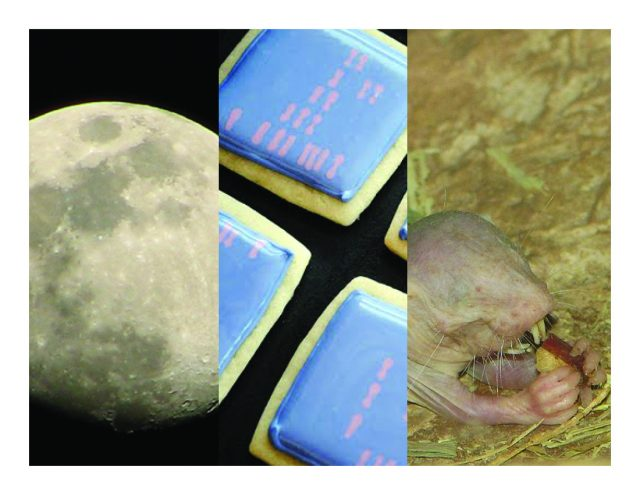 Moon trees, magical mole rats, and some awesome videos
