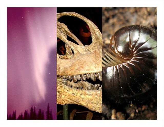 Wandering whales, millipede mating, and sightseeing sauropods