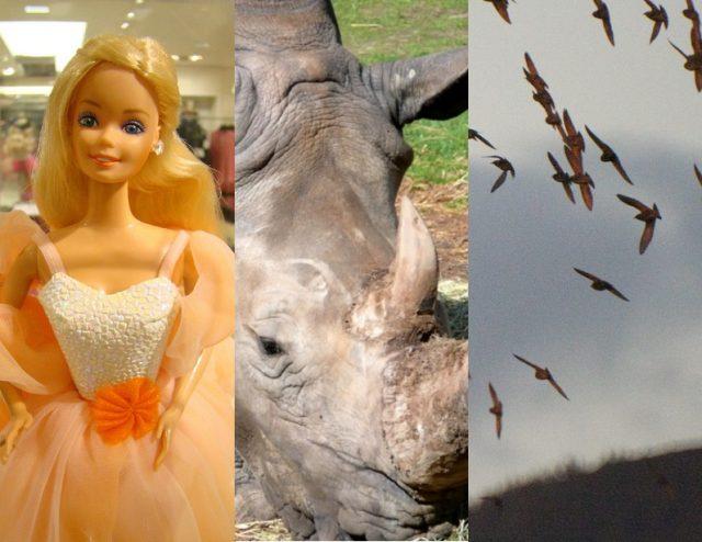 Flying rhinos, flocking birds, and Barbie brains