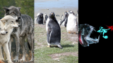 Wolves, The Falklands, and arthropods galore