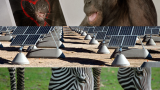 Online dates, solar farms and zebra stripes