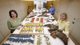 Q&A: The science of feather forensics