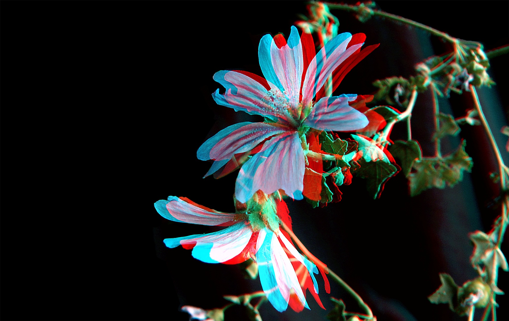 fb1e591bb2 A flower shown in anaglyph (red blue) 3D  Image Credit  Jose Paulo Carvalho  Pereira