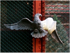 The Raptor Trust rehabilitates 3,500 to 4,000 birds a year [Image credit: Kate Baggaley]