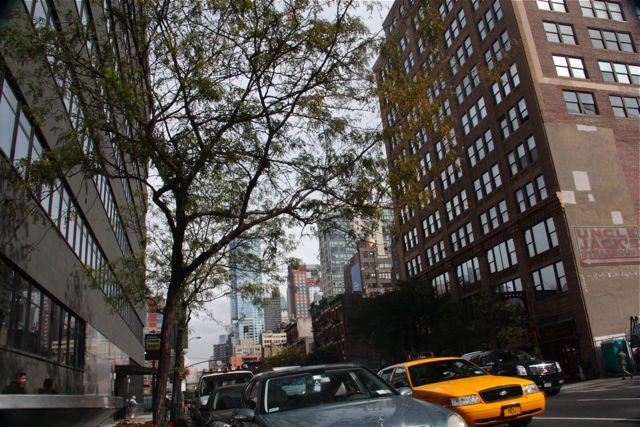 The high cost of carbon in city trees