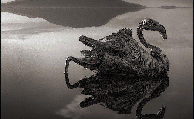 A mummifying lake