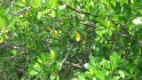 On the ground: Florida's extraordinary mangroves
