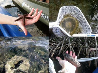 Some of the wildlife we encountered as introduced by our guide, clockwise: a sea star, an upside down jellyfish (when underwater it rests with its tendrils facing upwards to feed), a sea cucumber, and a (tire-sized) sponge.