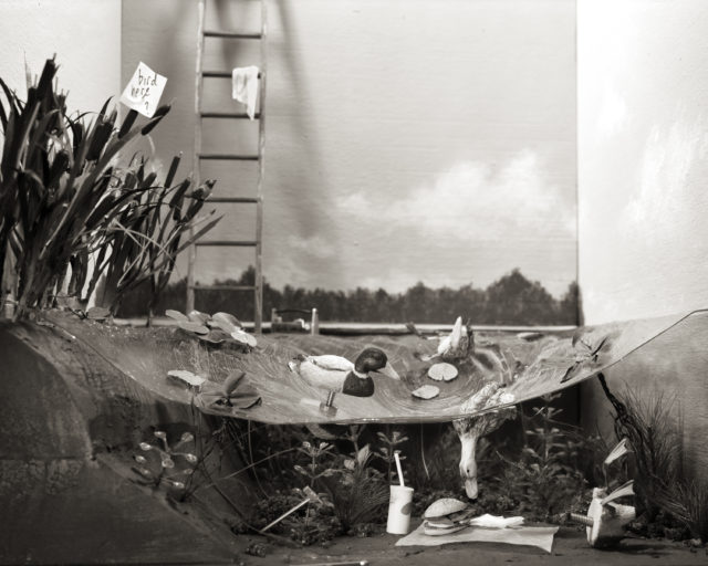 "Lori Nix, ""Ducks,"" 2014, Archival inkjet print, 15˝ x 18.˝ Courtesy of the artist."