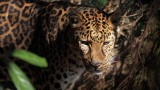 Preserving a safe passage for jaguars