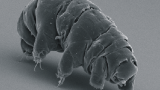 VIDEO: Close encounters with water bears