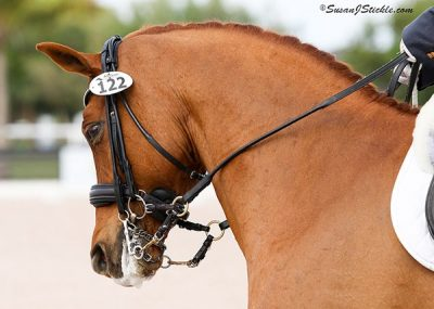 "London Swing, or ""Louie"", brings a vibrant and charming personality to the dressage ring. [Image credit: Joanna Jodko photography]"