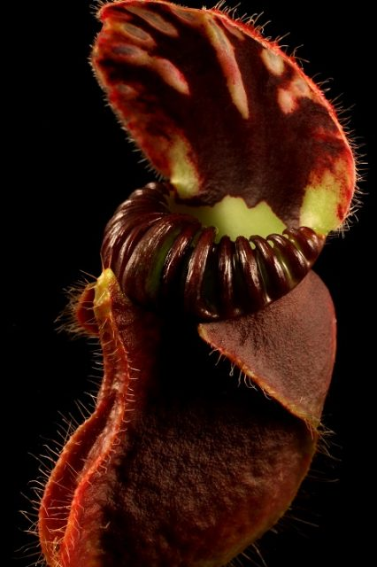 The weird world of carnivorous plants