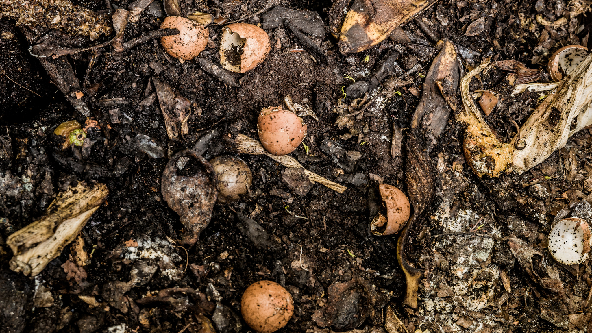 how i will try to convince myself (and you) to compost | scienceline
