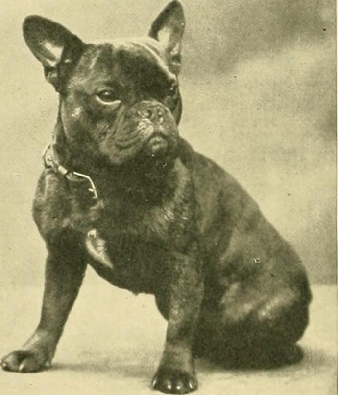 The De Evolution Of The Bulldog Scienceline