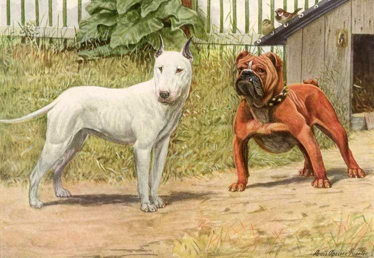 The De Evolution Of Bulldog