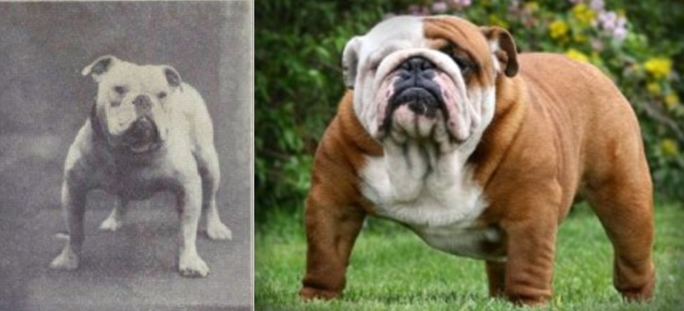 How Should A Dog Look Without Breeding