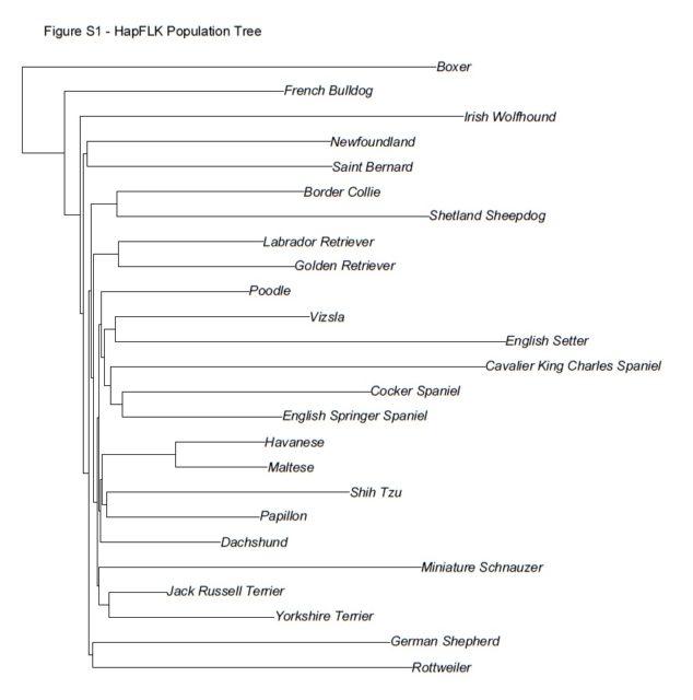 The (de-)evolution of the bulldog   Scienceline