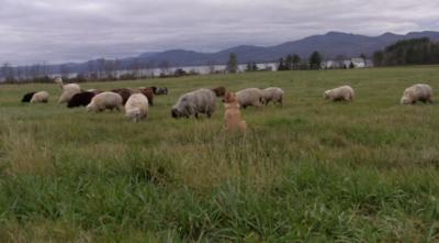 Scuttleship Farm