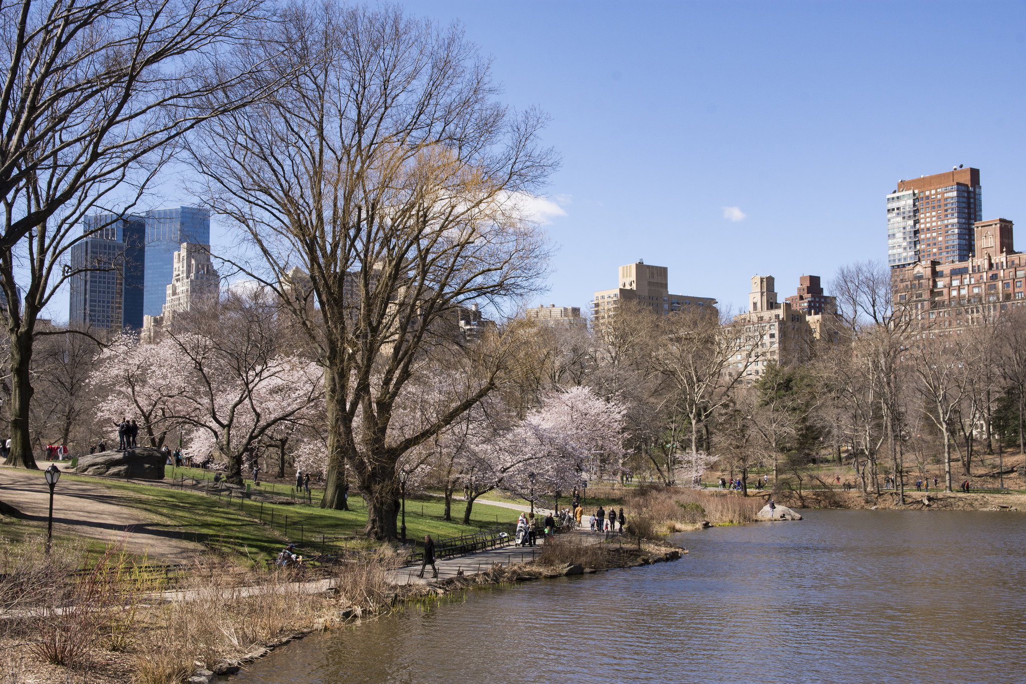 A Central Park scene with a lake, trees and skyscrapers.