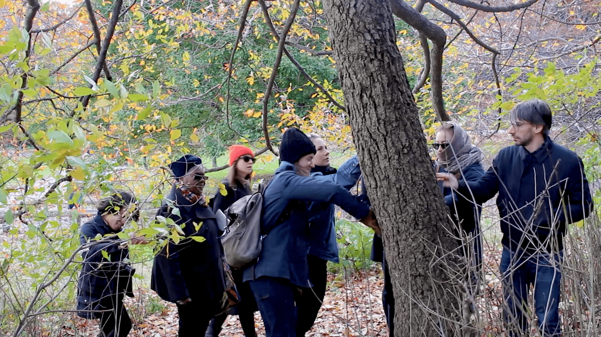Nett and a group of her students are gathered around a tree in Prospect Park