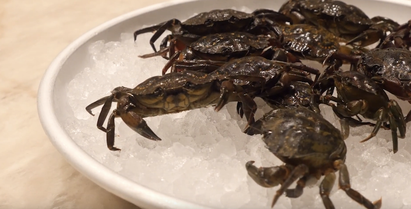 crabs in bowl of ice