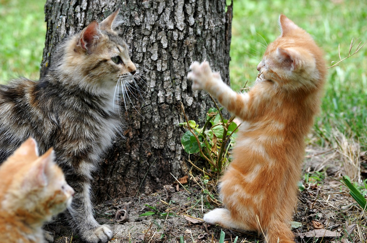 Cats playing outside