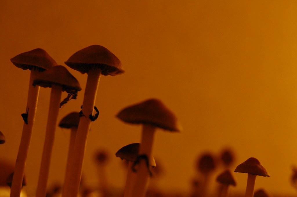 A few shrooms