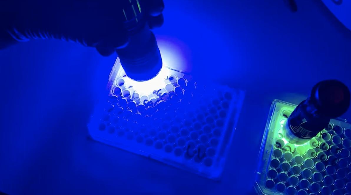 Shining light on cells.