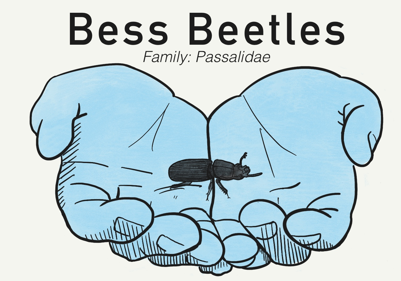 blue hands holding a bess beetle