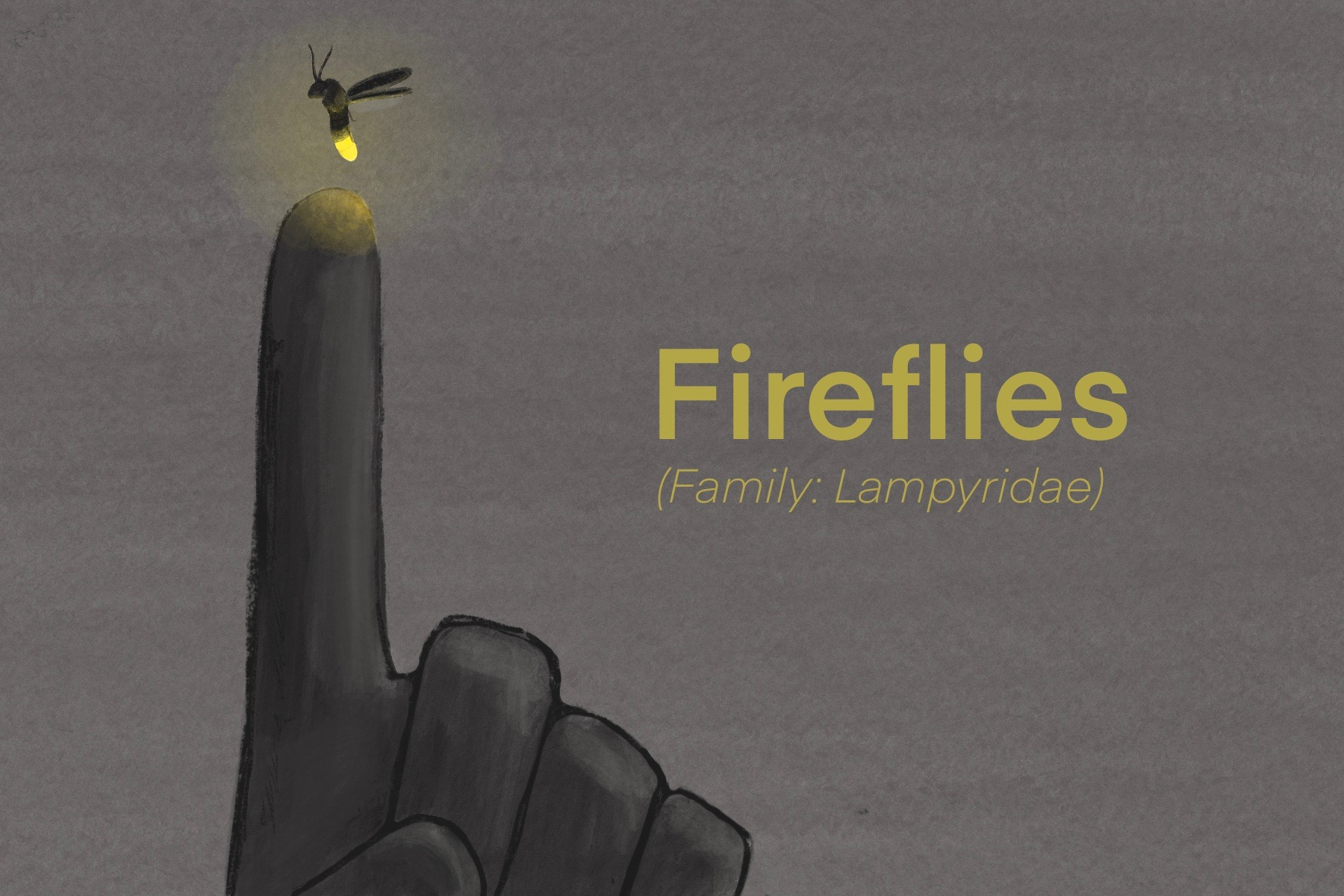 Graphic of someone pointing to a firefly. Text overlayed with Fireflies (family: lampyridae) over the graphic