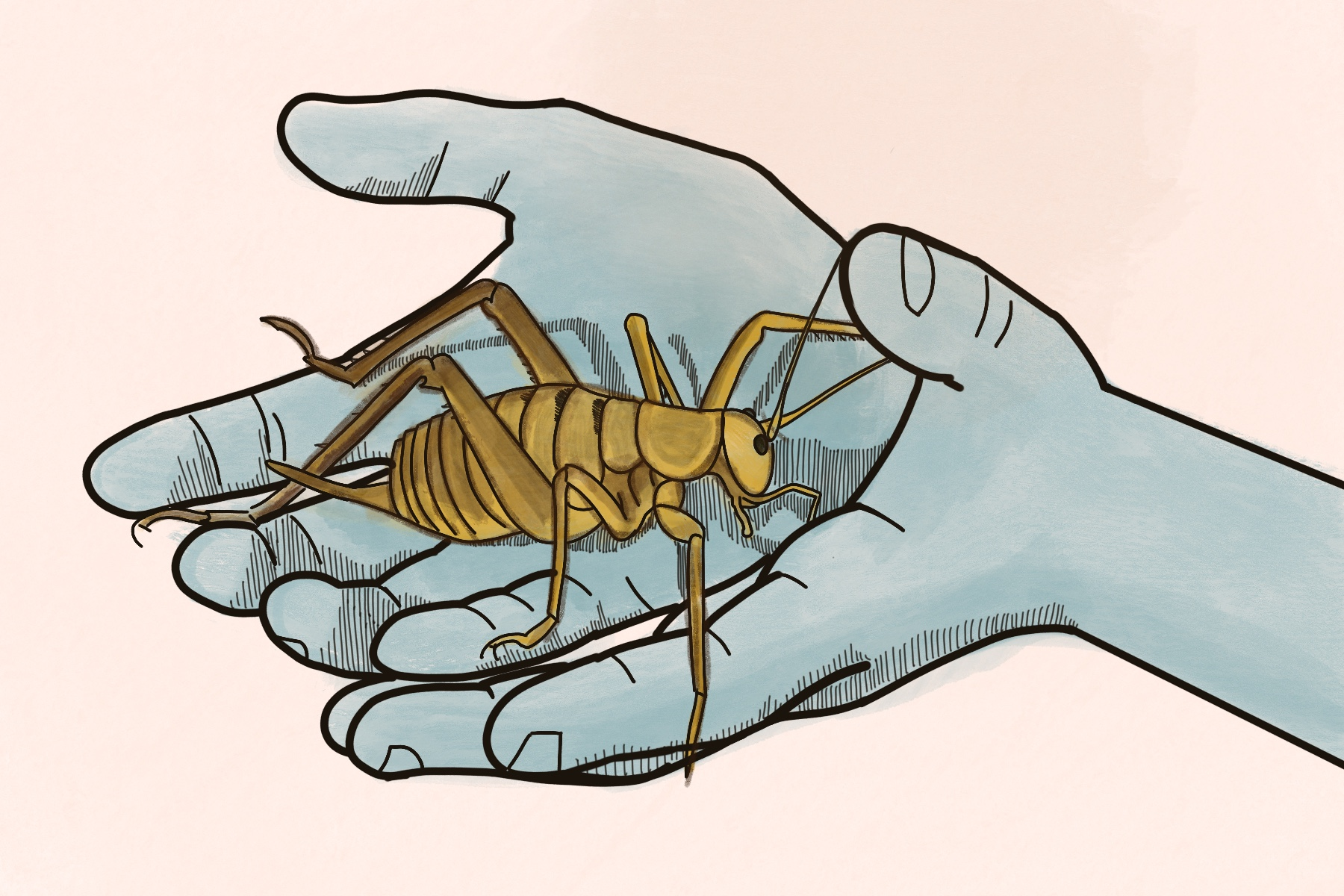 Graphic of someone holding a weta