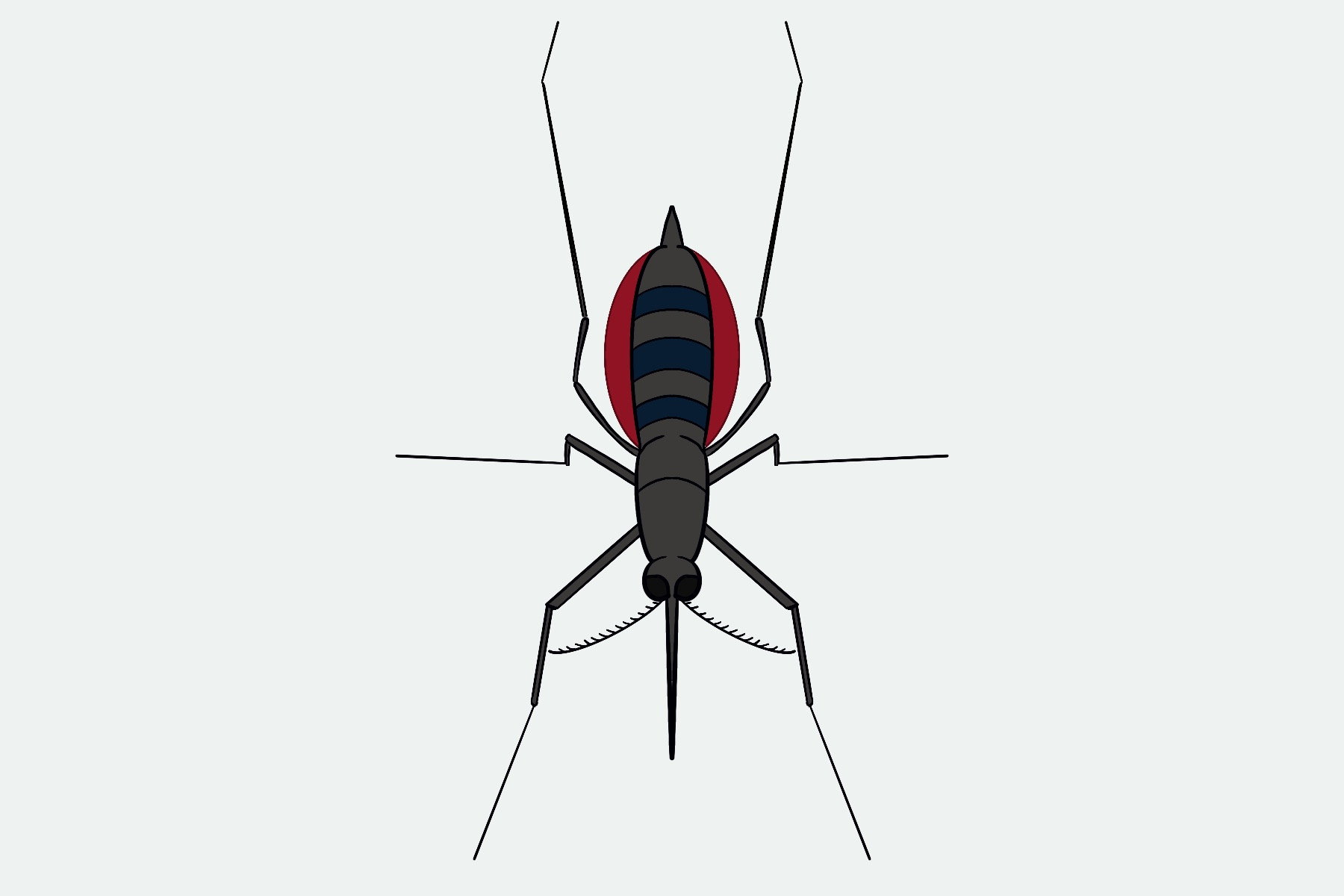 Graphic of a mosquito engorged with blood