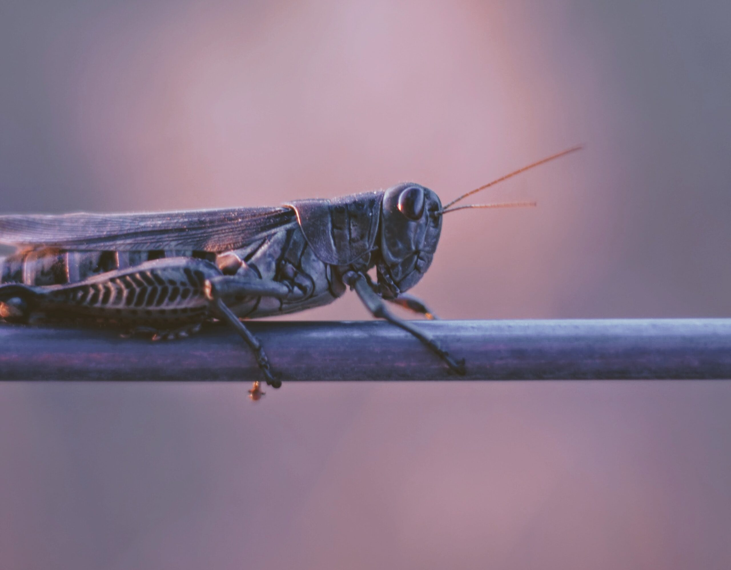 image of a grasshopper on a stick