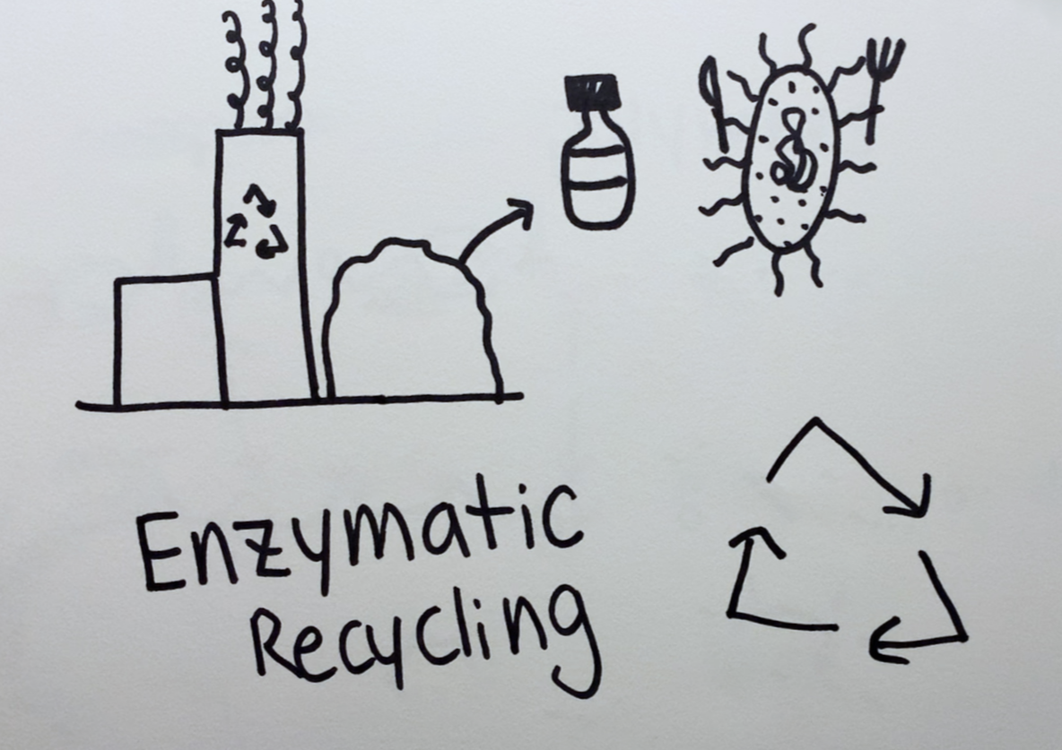 Enzymatic Recycling